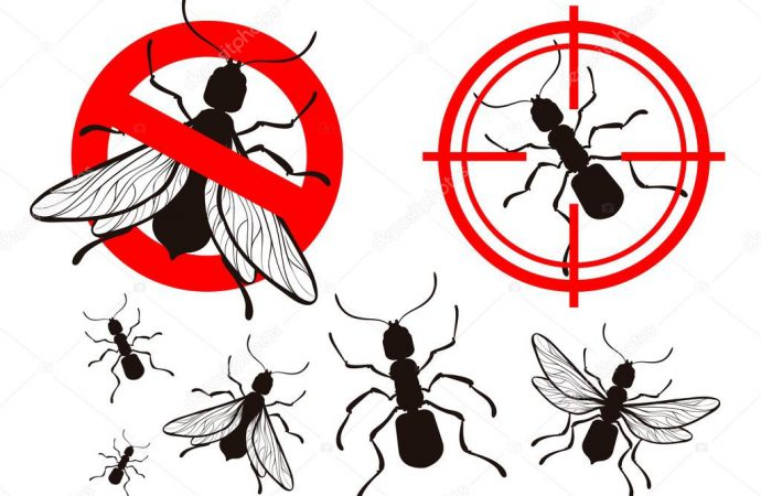 Check Out Valuable Tips For Choosing A Pest Control Company