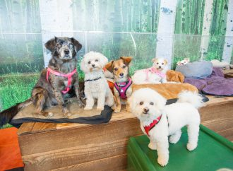 Why Your Puppy Needs Daycare